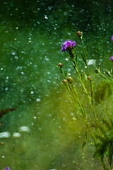 (mblsha) Tags: flower water mto1000