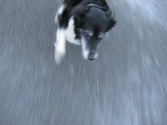 dog running (maddog04666) Tags: dog snow blur tarmac wales speed collie running cwmmawr