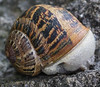 Snail on Stone Wall (crop)