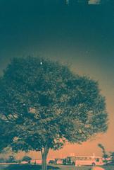 Sampa Tree (Acau Fonseca) Tags: tree 35mm lomo sopaulo ultrawide vivitar rvore 22mm redscaled