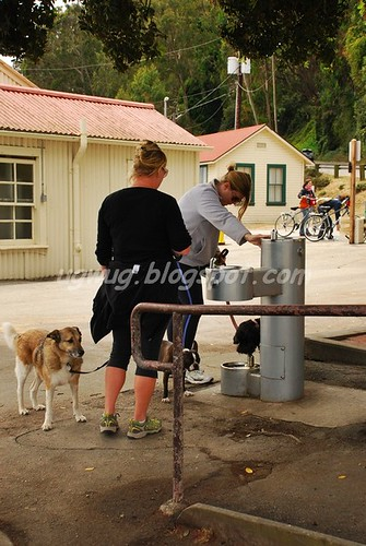 Water stop for doggies too!