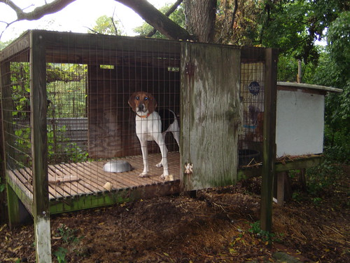 Ukc Forums Off The Ground Kennels
