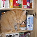 Cat in a Cupboard