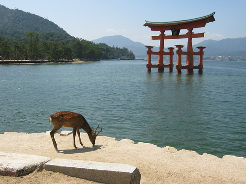 Grazing (posing?) with the torii in the background.