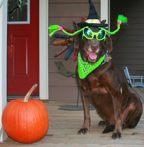 Halloweenie!