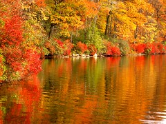 Red and Orange Fall (Stanley Zimny) Tags: park autumn trees red orange lake ny reflection tree fall nature colors leaves automne catchycolors leaf colorful colours seasons natural fallcolors autumncolors fourseasons harriman reflexions autumnal colorexplosion 4seasons p1f1 colorphotoaward