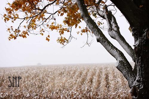 . fall snow .