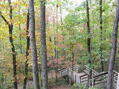 Wooden stairway follows the falls down into the woods (Joynes, North Carolina, United States) Photo