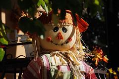 (Le Chibouki frustr) Tags: halloween fuji montral montreal s5 awb nonoisereduction lupinlevorace fujis5pro s5pro fujifilmfinepixs5pro automaticwhitebalance lechiboukifrustr