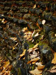 leave, rocks, and moss (foreverdigital) Tags: autumn trees newyork fall nature leaves yellow moss rocks upstateny foliage gorge newyorkstate ithaca buttermilkfalls ithacany buttermilkfallsstatepark