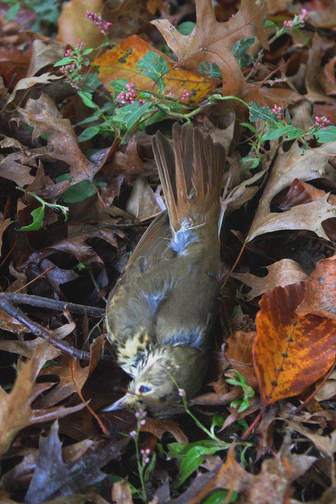 dead birdie