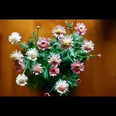 HANA (shotam) Tags: house flower film home table nikon dof bokeh snap f3 nikkor  2009  scaned 50mmf14d