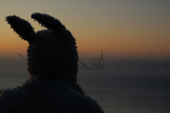 (townscap.es) Tags: sanfrancisco november friends max costume wolf play bakerbeach 2009 wherethewildthingsare oth