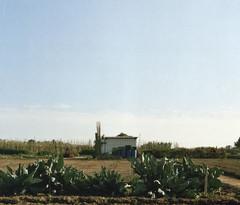 Un dia de diumenge (Oscar Olivares Pous) Tags: countryside horta huerta marketgarden chabola