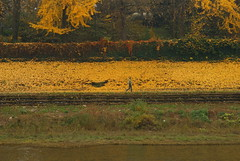 la signora nel giallo (david pizzoli) Tags: italien italy colors yellow torino italia giallo turin colori italie italians gialla lungopo pizzoli