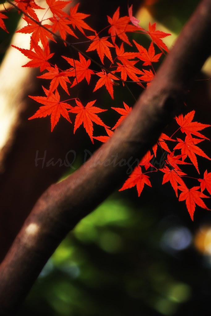 Colored Season