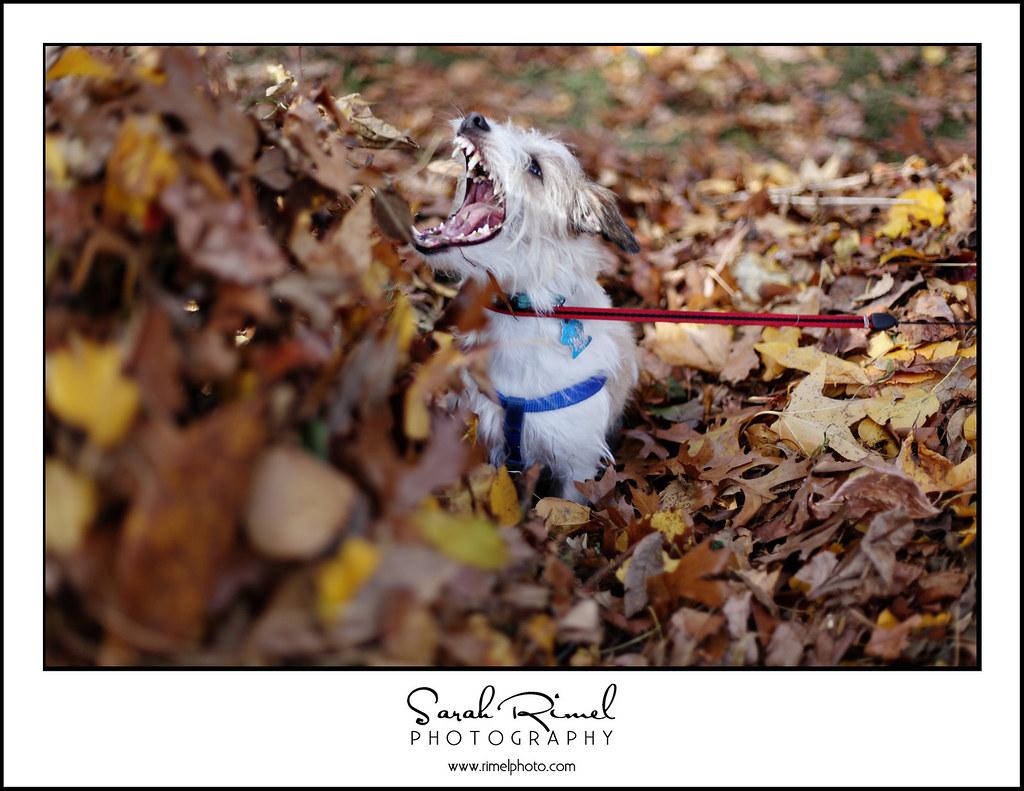 leaf fun 36