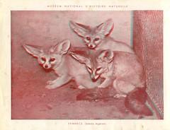 zoorelief p9