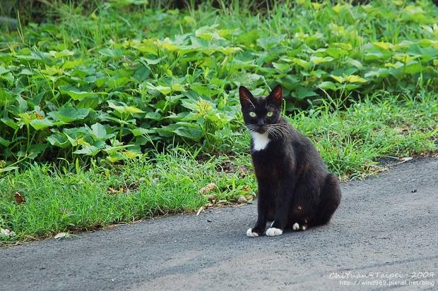 [侯硐]Cat。貓鎮中的一紳士貓01.jpg