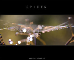s  p  i  d  e  r (G.Hotz Photography (busy as a bee =)) Tags: portrait people food lake photography austria spider dornbirn feldkirch sterreich stillleben foto fotograf fotografie photographer web hard bregenz gerald photograph bodensee constance bludenz oesterreich vorarlberg produkt hotz hochzeitsfotograf geraldhotz fotolyst