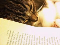 Feline book mark