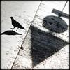 incontro casuale (mario bellavite) Tags: club ombre cartello piccione segnale stradale authors the incontro marciapiede casuale bellavite pietradiprun mariobellavite