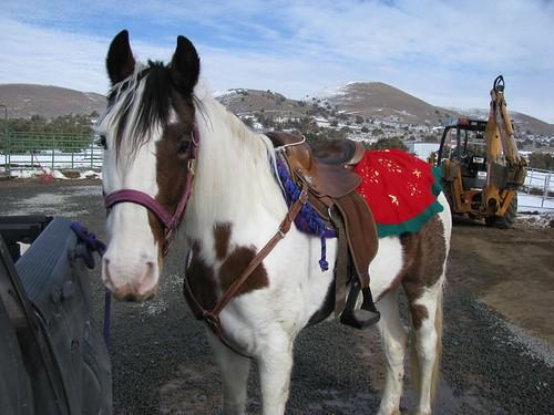 Festive horse!