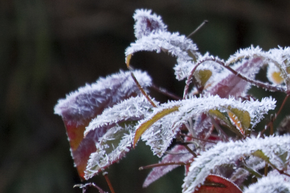 121909_frost3
