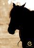 Se um dia tu chegares... (Edu Rickes) Tags: horses animals sepia canon contraluz caballos monochromatic rodeo animais rs cavalo gaúcha rodeio gaúchos beautifulshots piratini brazilianphotographers fotógrafosbrasileiros tirodelaço todososdireitosreservados gineteadas fotógrafosgaúchos culturagaúcha edurickes canoneosdigitalrebelxsi belasimagens césaroliveiraerogériomelo fimdelida edurickesproduçõesfotográficas copyright©2010 fotografiaslegais