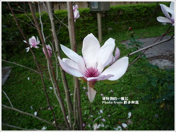 不知名的花