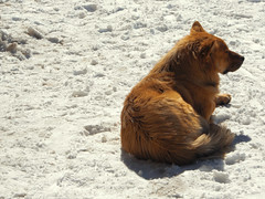 Abominable perro de las nieves (Fele_lp) Tags: dog pet snow animal alone nieve perro solo mascota