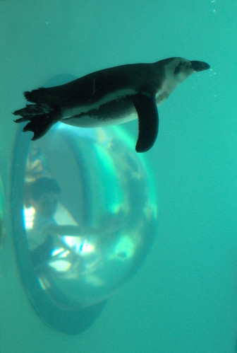 Penguin vision