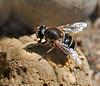 Nice fellow in my garden (mastino0100) Tags: summer nature bug putukas beautifulmonsters