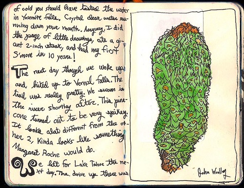 '' YOSEMITE PINE CONE '' by John Woolley / 10 years old