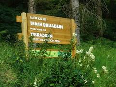 Tibradden woods