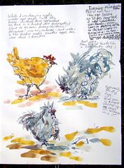 Filoli Gardens - Chickens