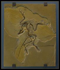 3935230068 9c30a6ab0c m Fossils: Opisthotonic Death Pose