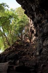 2009-05-12-IMG_0138-2 (abnormalcy) Tags: trees hawaii kauai cave canonef35mmf2 haenastatepark