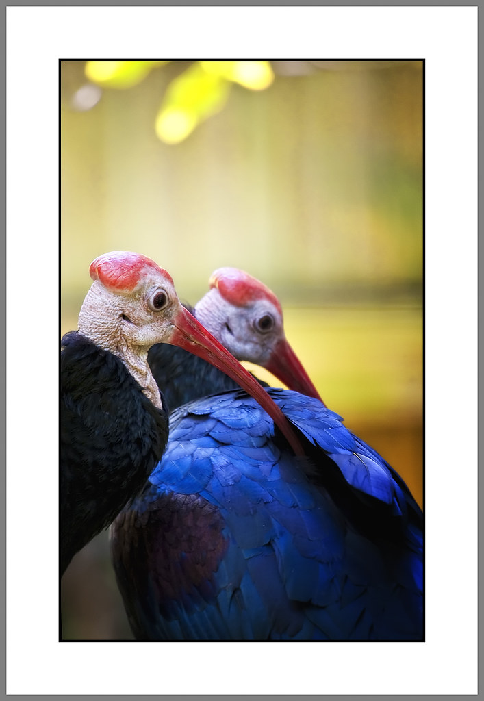 IMAGE: http://farm3.static.flickr.com/2638/3986472562_6aeeb3f881_b_d.jpg