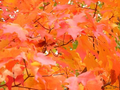 Whorl of Leaves