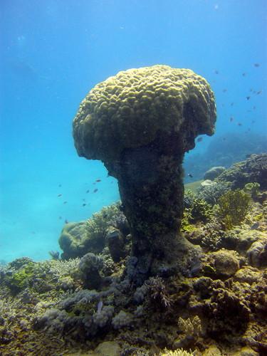 Mushroom shaped Coral