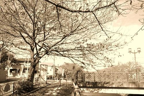 町田樹 画像39