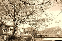 町田樹 画像37