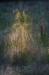 Last light in Winter Grass