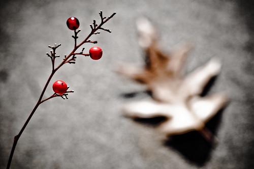 Day  91 - Winter Berries