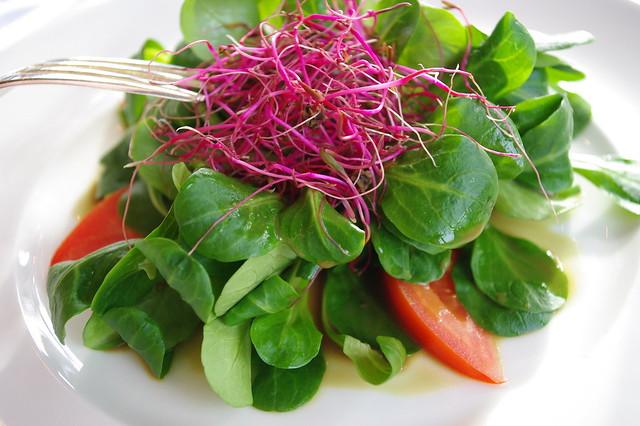 Mâche / Lamb's lettuce