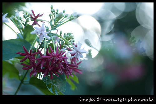 naturebokeh02