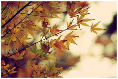 Autumn is gone (RL Stars) Tags: autumn naturaleza nature yellow vintage hojas 50mm pentax bokeh explore otoo leafs photoart ricoh xr vigo amarillas f17 k200d tecendoredes rlstars