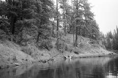 6.2016 Horseshoe Lake BW Cannon PS E11 (Jcicely) Tags: 2016 beach bw canonfilmpointandshoot easternwashington june kayaking lake loonlake loonlakewithmarvin trees water