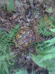 2 - Turtle